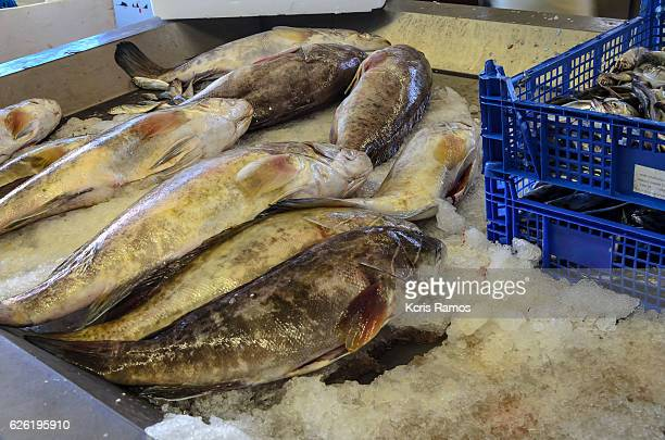 Fresh fish grouper, very common in recipes of moquecas and caldeiradas or of roasted roasts in the oven.
