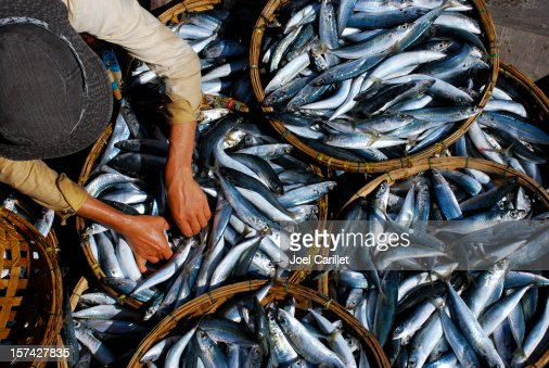 Fresh fish is sorted at market in Hoi An, Vietnam