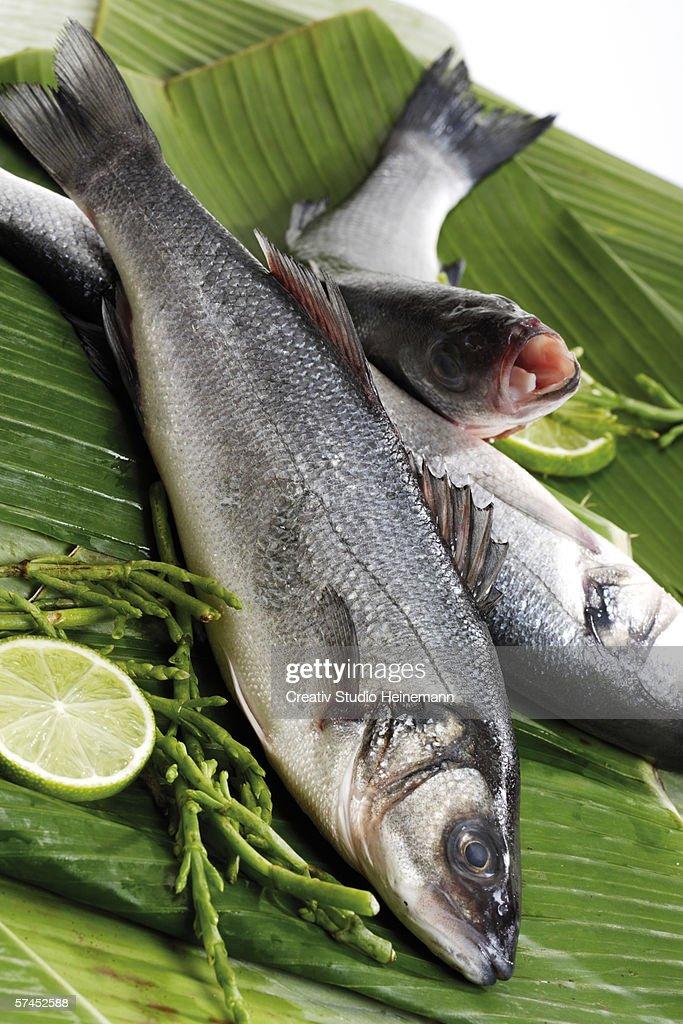 Fresh fish, loup de mer on banana leaves : Stock Photo