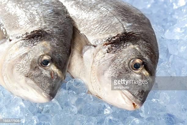 Pesce fresco su ghiaccio