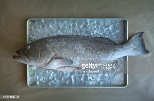 Fresh fish on ice : Stock Photo