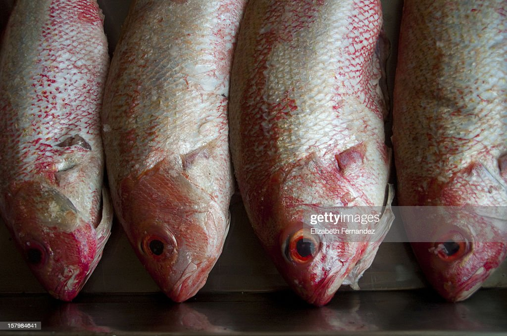 Fresh fish : Stock Photo