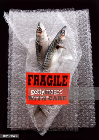 Fresh Fish Wrapped in Bubble Wrap : Stock Photo