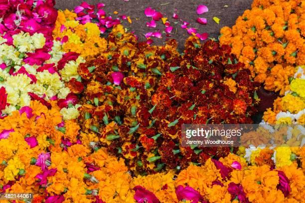 Fresh flowers at market, Pushkar, Rajasthan, India