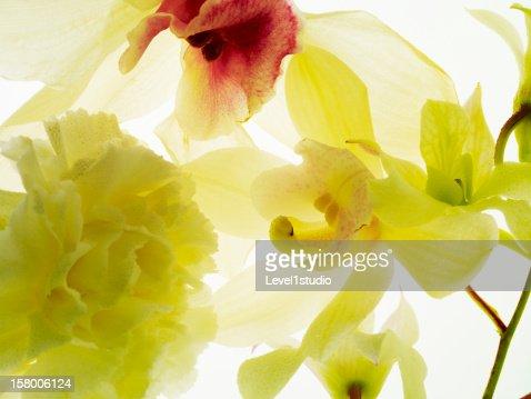Fresh Flowers : Stock Photo