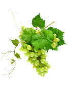Fresh grape cluster with leaves