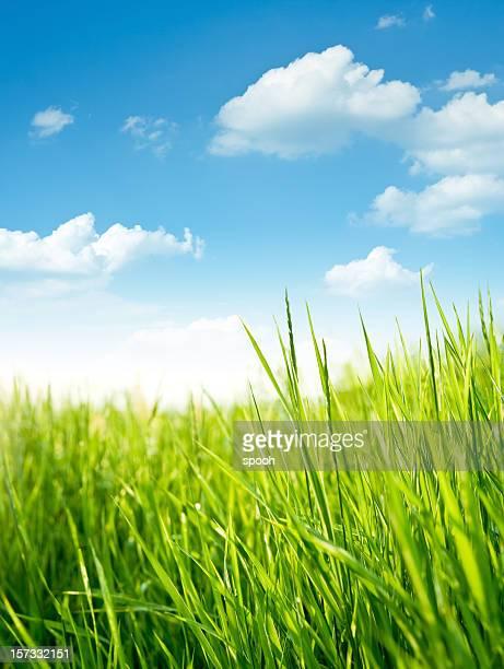フレッシュグラスの草地