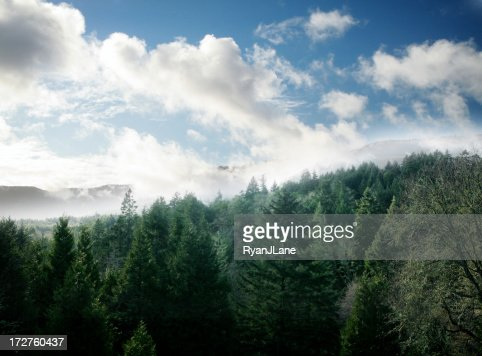 Fresh Green Forest and Sky