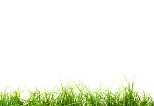 Wide background of fresh green isolated grass