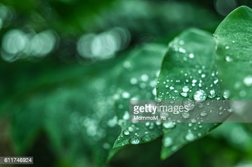 Fresh green grass with dew drops closeup. Nature Background : Stock Photo