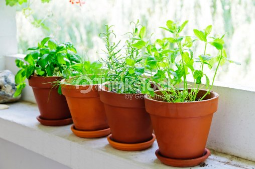 fresh green herbs : Stock Photo