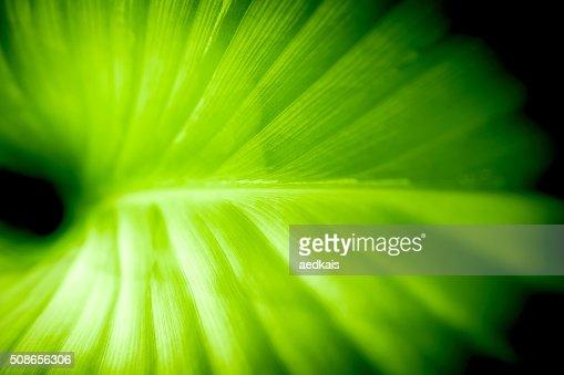 Fresh green leaf : Stock Photo