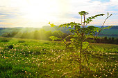 Sun rays shining through leaves ,nature background. Spring background.