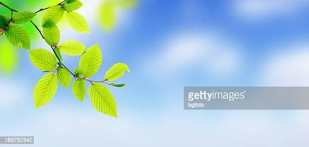 Fresh Green Leaves - Panorama (XXXL)