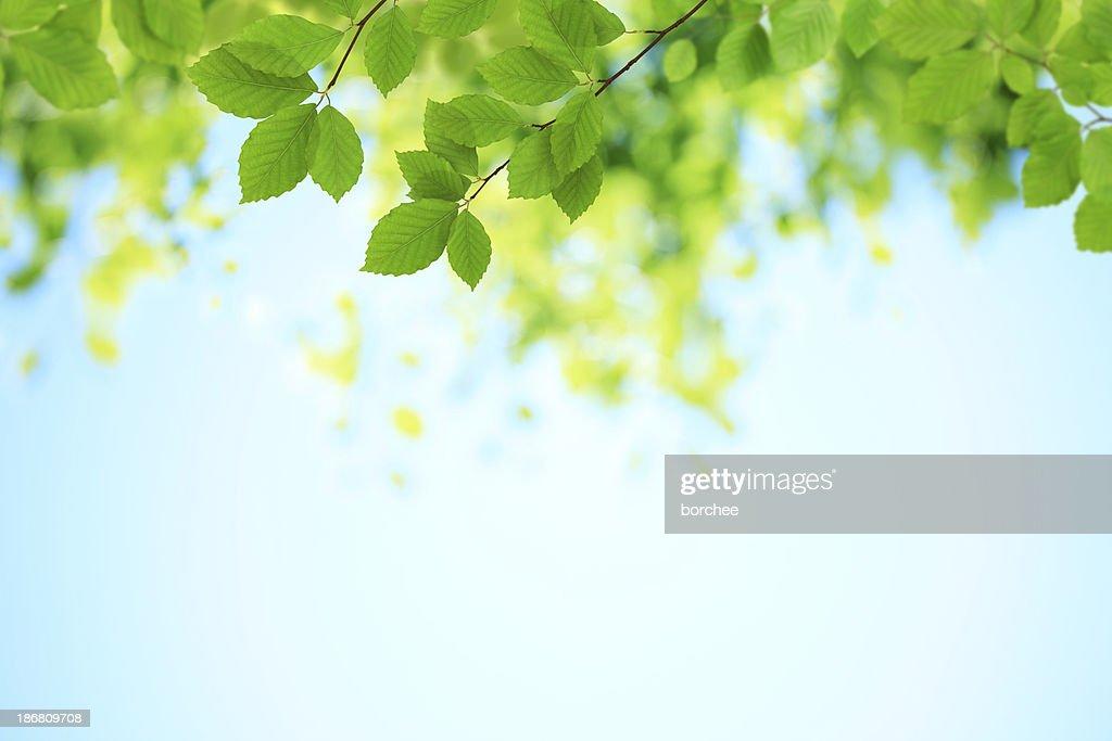 Fresh Green Leaves : Stock Photo
