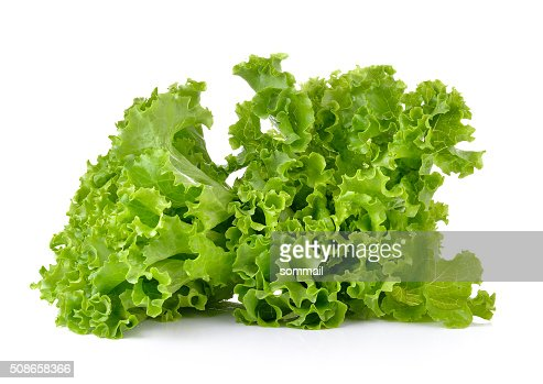 Fresh green lettuce isolated on a white background : Stock Photo