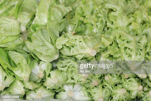 Fresh green lettuce : Stock Photo