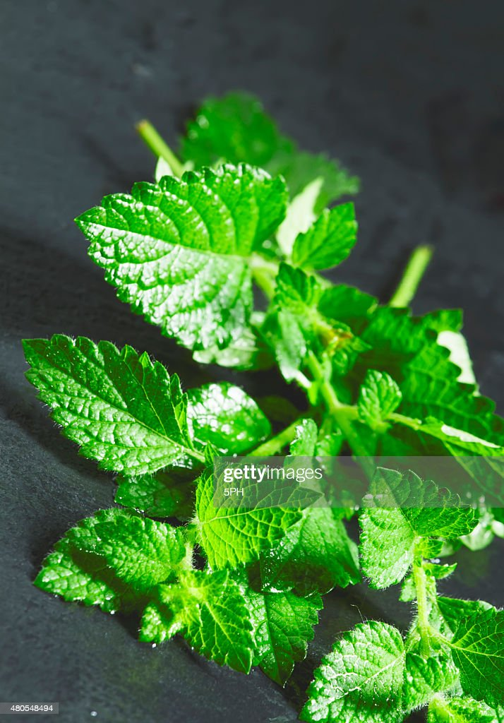 Menta verde fresco con gotas de agua : Foto de stock
