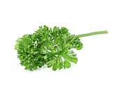 fresh green parsley vegetable isolated on a white background