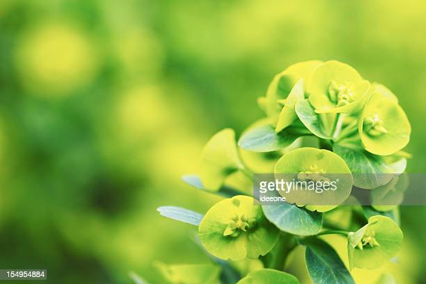 Fresco verde