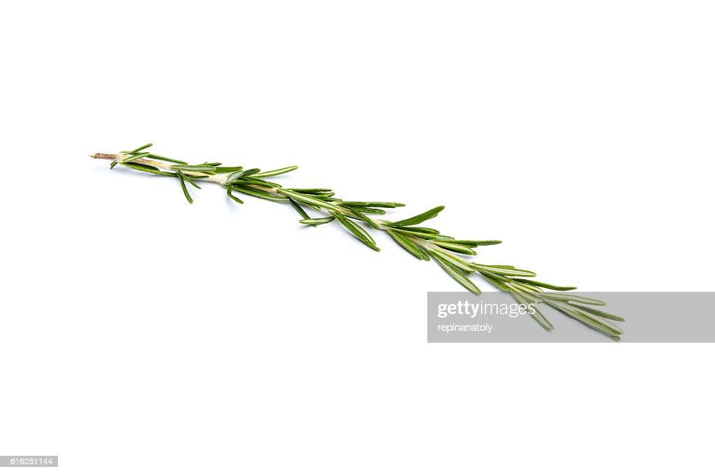 Símbolo de espiga de romero fresco verde : Foto de stock
