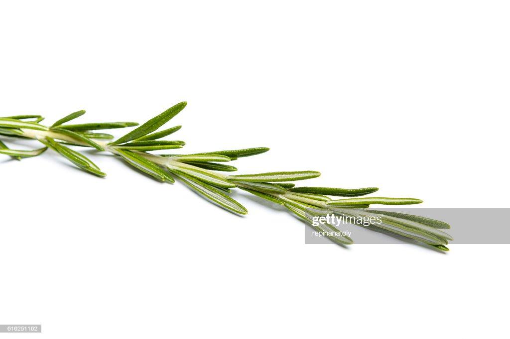 Frescas de Ramo de alecrim : Foto de stock