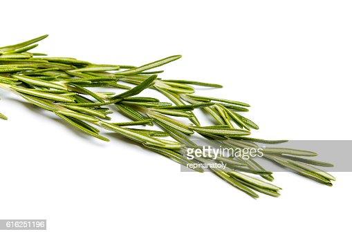 Fresh green sprig of rosemary : Stock Photo