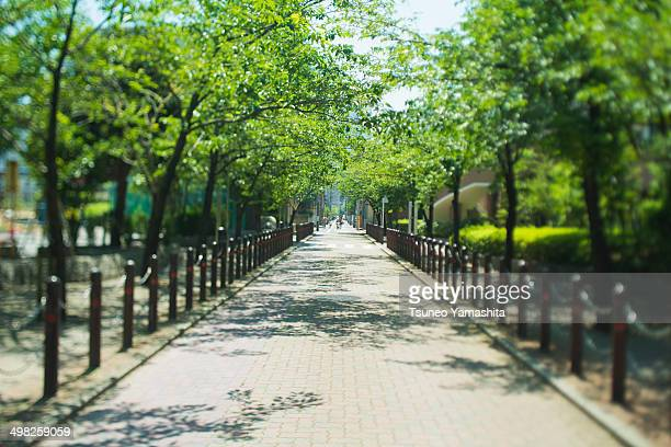A fresh green street lined with trees
