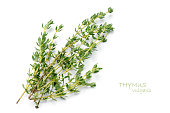 fresh green thyme, Thymus vulgaris, isolated on a white background with sample text