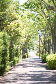 Fresh green tree lined pathway
