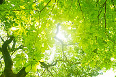 Fresh green tree.  Image of an ecology