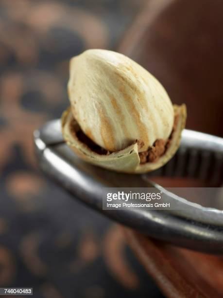 Fresh hazelnut on nutcrakers