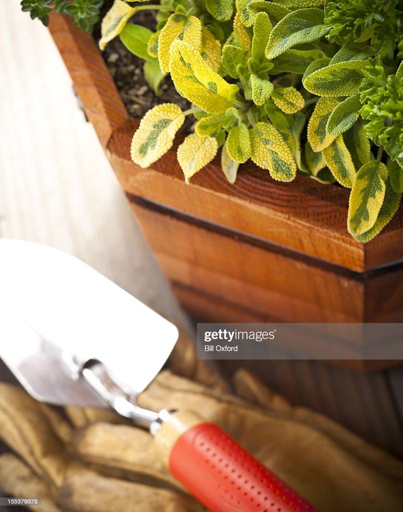 Fresh Herb Garden Stock Photo Getty Images