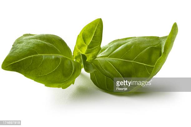 Fresh Herbs: Basil Isolated on White Background