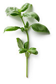 Fresh Herbs: Basil Isolated on White Background