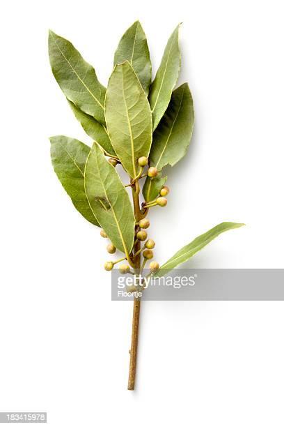 Fresh Herbs: Bay Laurel
