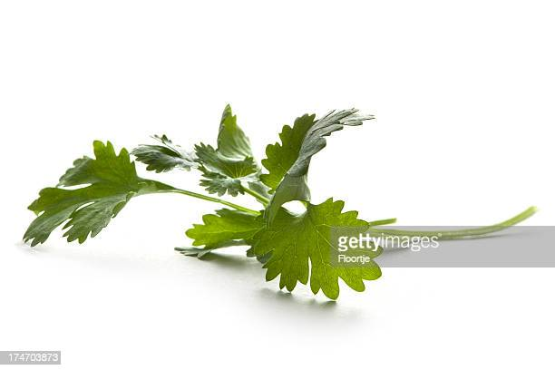 Fresh Herbs: Cilantro Isolated on White Background
