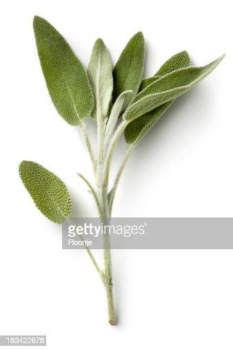 Fresh Herbs: Sage