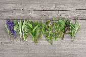 Fresh herbs on wooden kitchen table. Food background. Basil, rosemary, mint, sage, thyme, oregano, marjoram, savory, lavender