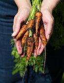 Fresh Homegrown Carrots