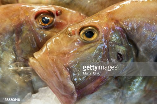 john dory fish stock photos and pictures getty images