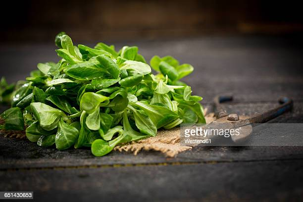 Fresh lambs lettuce on jute and pruner