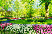 fresh spring lawn with blooming pink and white spring tulips flowers