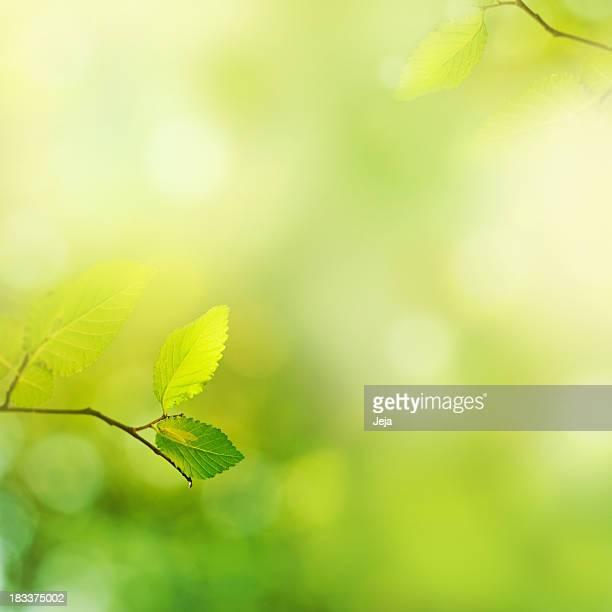 FRAIS leafs le matin