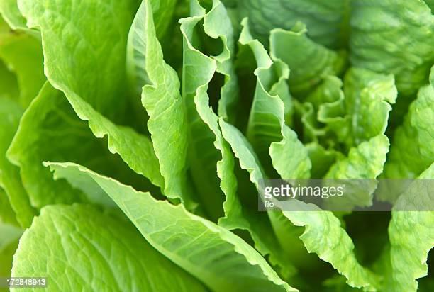 FRAIS salade de