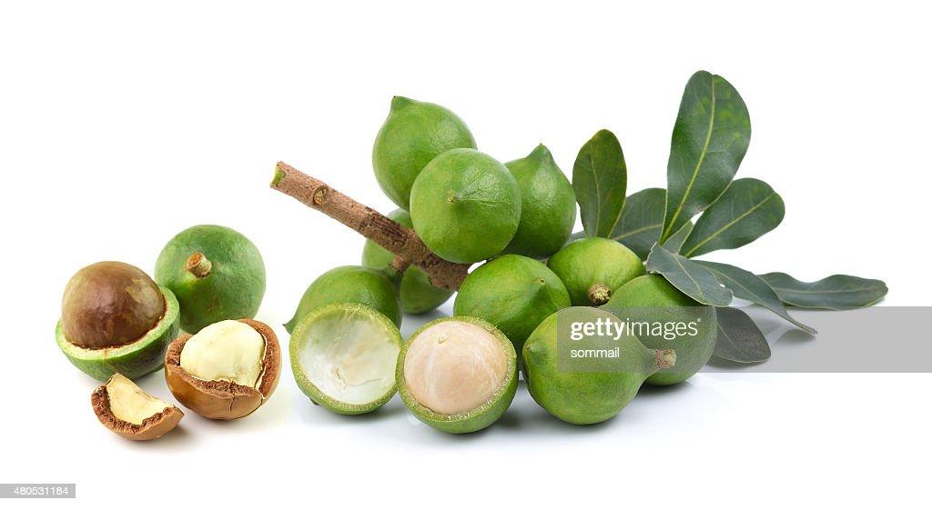 fresh macadamia nut on white background : Stockfoto