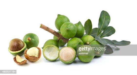 fresh macadamia nut on white background : Stock Photo