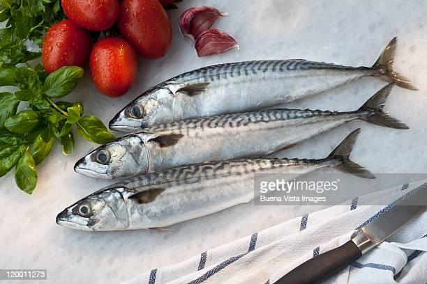 Fresh mackereis