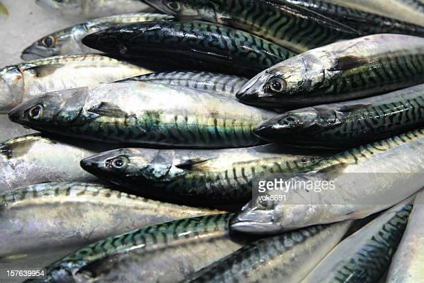 Fresh mackerel on the market