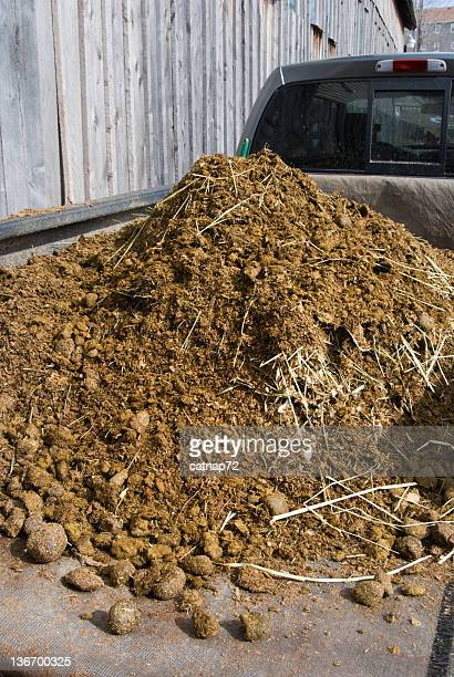 Fresh Manure Load on Truck at Barn, Farming and Agriculture
